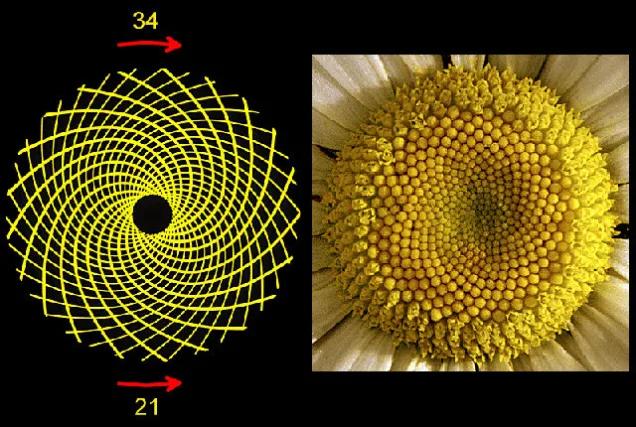 Cabeça de uma flor